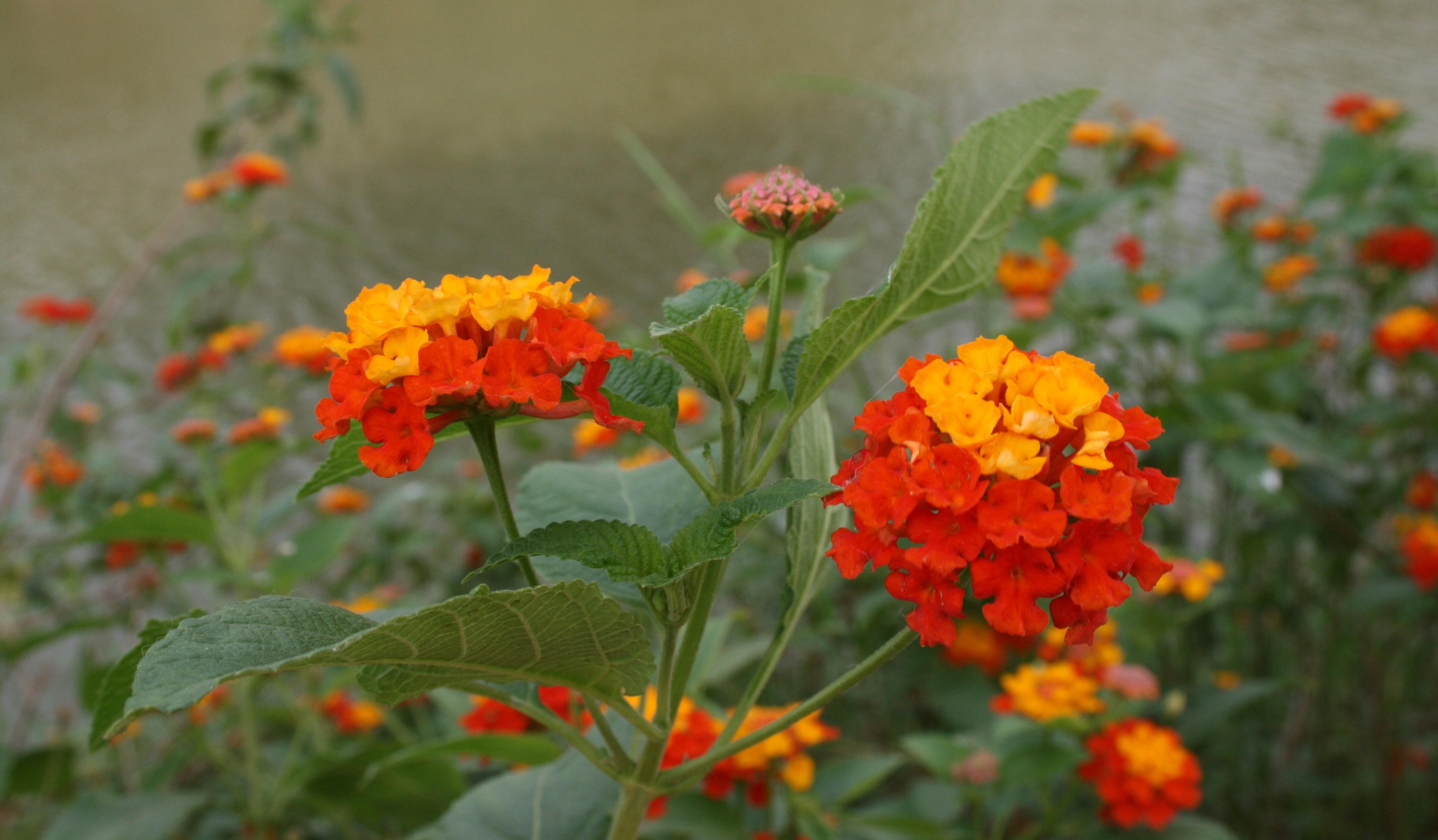 Blomster Ghana